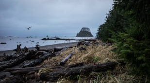 Ozette Island in the distance, on the beach, simply named The Pacific NW Trail.